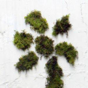 Des murs couleur nature
