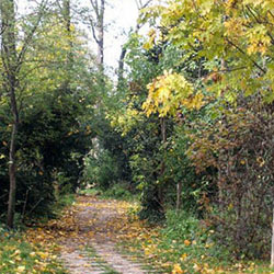 Jardins et biodiversité : un devenir