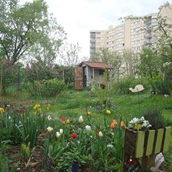 Chroniques d'un jardin partagé