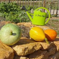 Un jardin partagé à La Doua