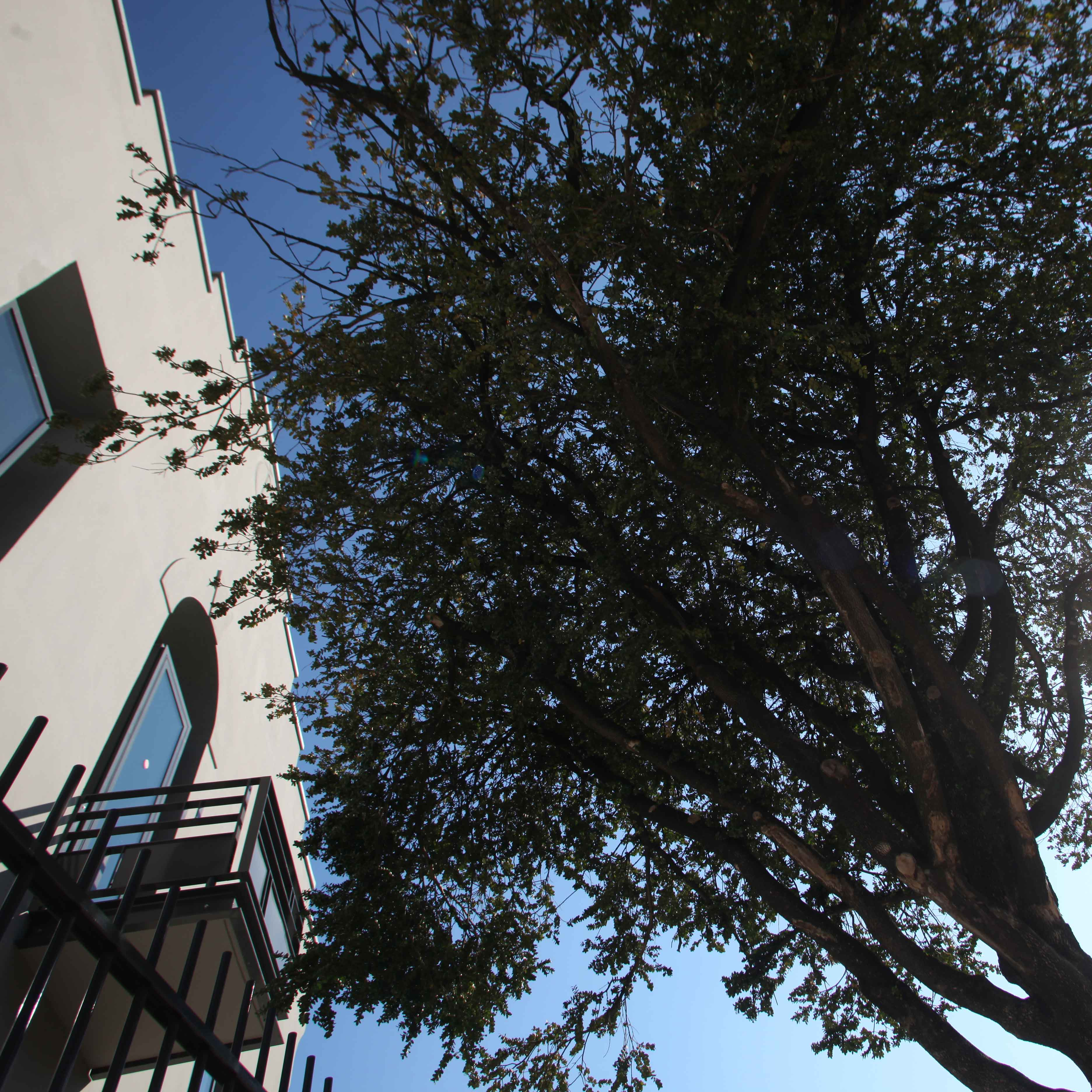 Carnets des mémoires : faire parler les arbres