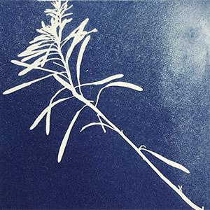 Du cyanotype en peinture